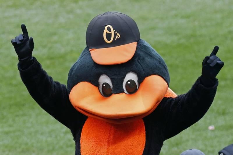 Oriole bird baltimore orioles mlb en español beisbol historia mascota