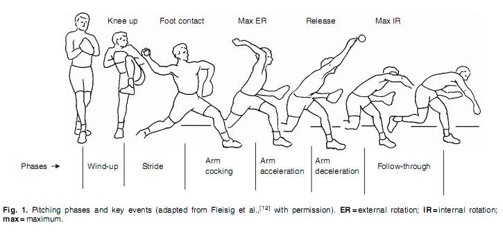 fases del pitcheo mlb en español beisbol Fases del pitch : Artículo Biomechanics of Baseball Pitching