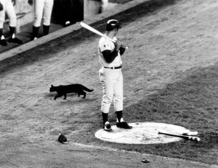 Ron Santo con gato negro contra los Mets en 1969 Chicago Cubs, 100 años de soledad